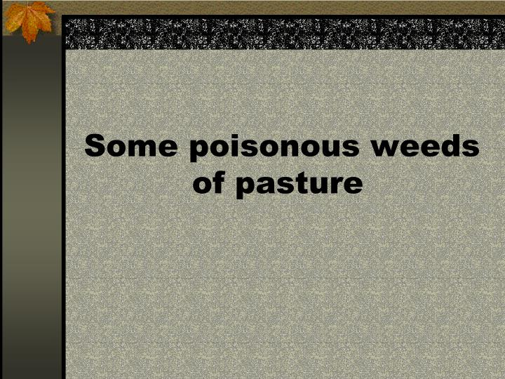 Some poisonous weeds of pasture