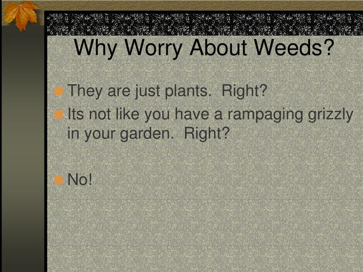 Why Worry About Weeds?