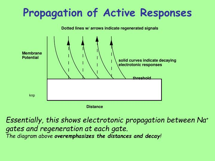 Propagation of Active Responses