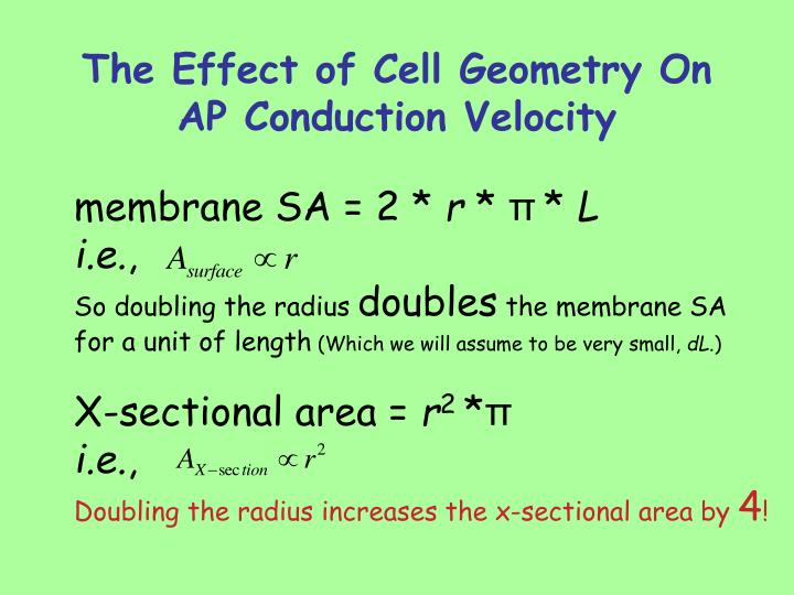 The Effect of Cell Geometry On AP Conduction Velocity