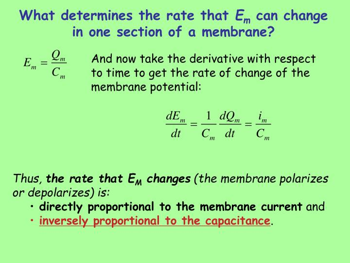 What determines the rate that