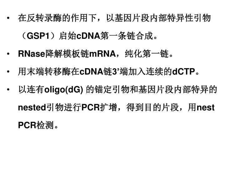 在反转录酶的作用下,以基因片段内部特异性引物(