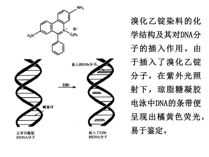 溴化乙锭染料的化学结构及其对
