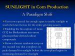 sunlight in corn production1