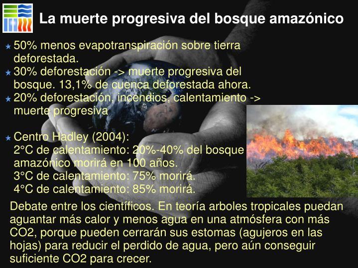 La muerte progresiva del bosque amazónico