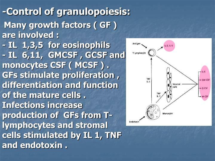 -Control of granulopoiesis:
