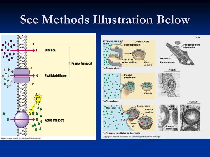 See Methods Illustration Below