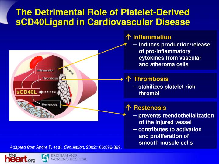 The Detrimental Role of Platelet-Derived sCD40Ligand in Cardiovascular Disease