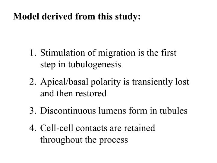 Model derived from this study: