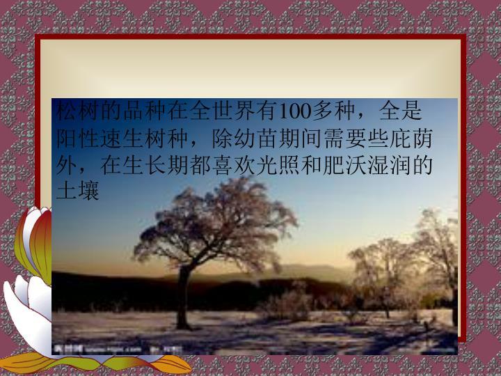 松树的品种在全世界有