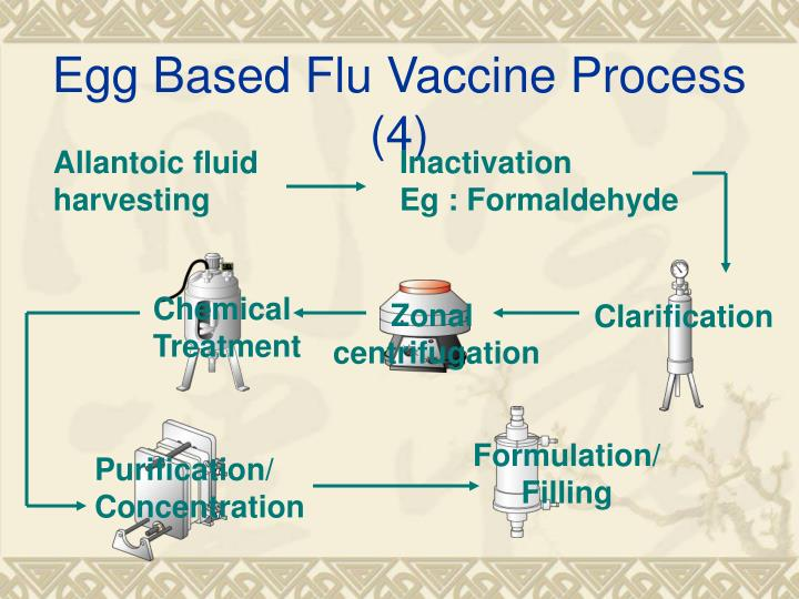 Egg Based Flu Vaccine Process (4)