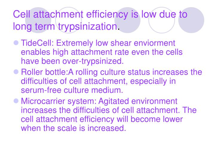 Cell attachment efficiency is low due to long term trypsinization
