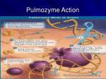 pulmozyme action
