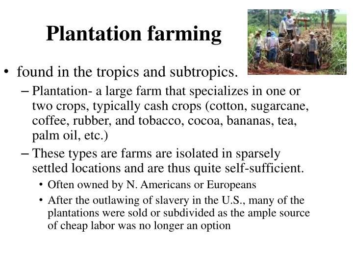 Plantation farming