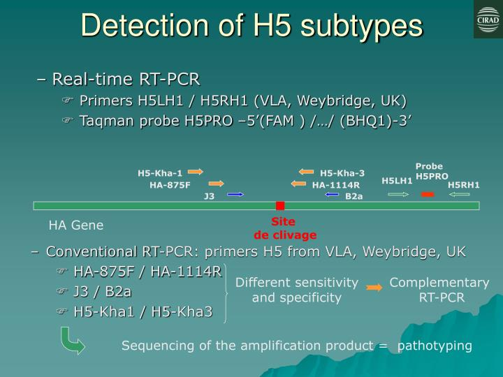 Detection of H5 subtypes