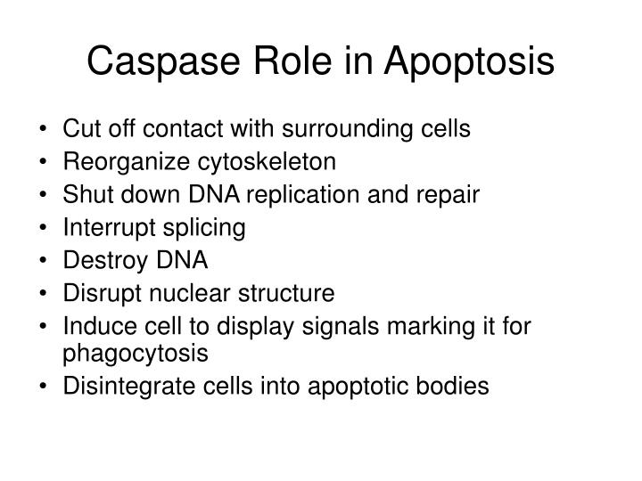 Caspase Role in Apoptosis