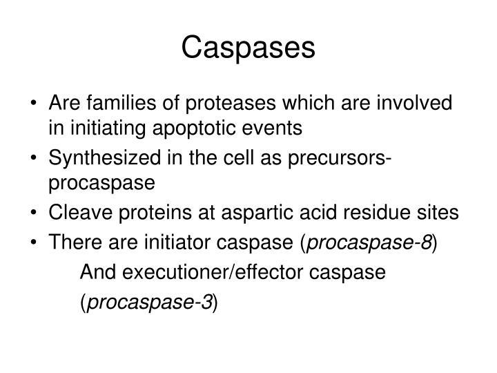 Caspases