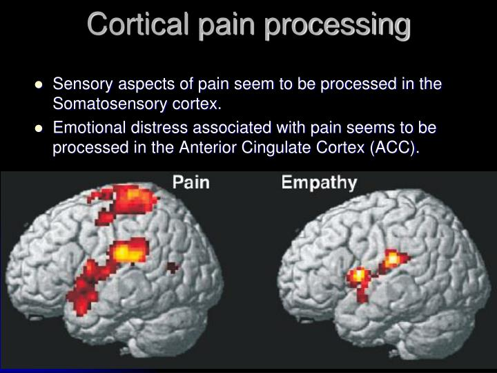 Cortical pain processing