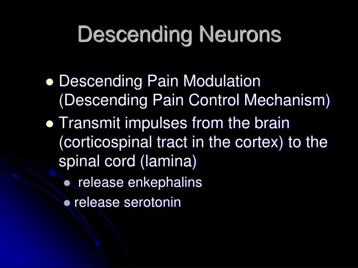 Descending Neurons