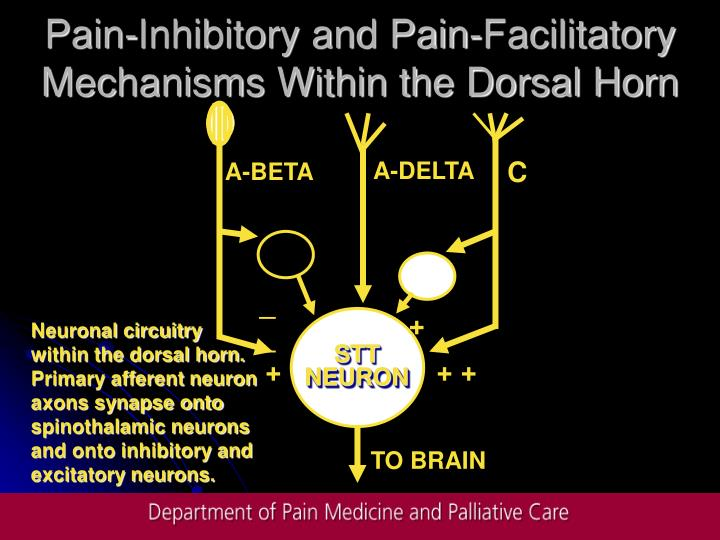Pain-Inhibitory and Pain-Facilitatory Mechanisms Within the Dorsal Horn