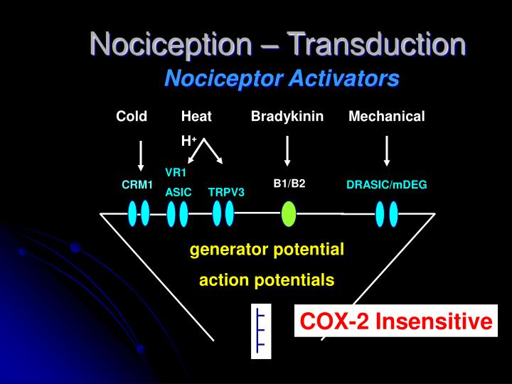 Nociception – Transduction