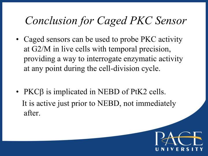 Conclusion for Caged PKC Sensor