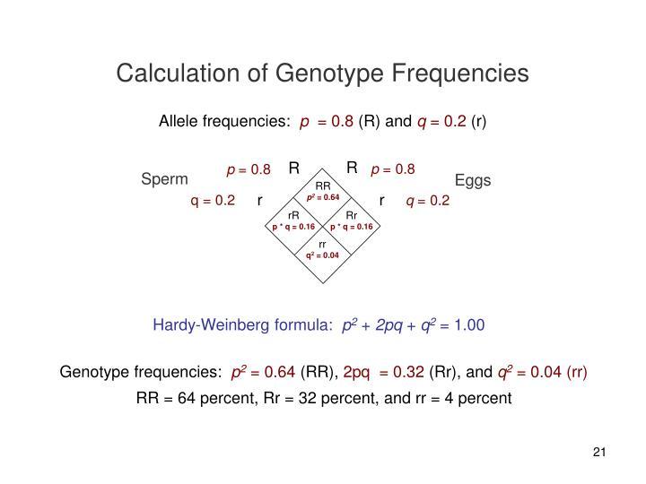 Calculation of Genotype Frequencies