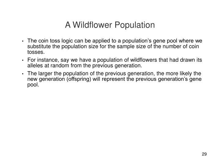 A Wildflower Population