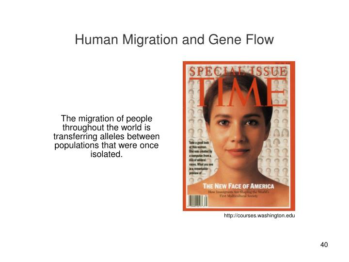 Human Migration and Gene Flow