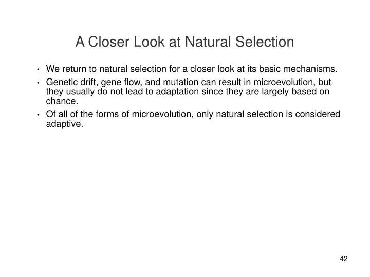 A Closer Look at Natural Selection