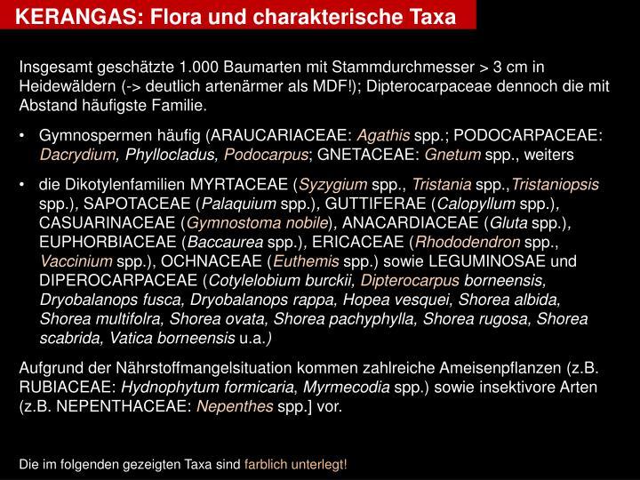 KERANGAS: Flora und charakterische Taxa