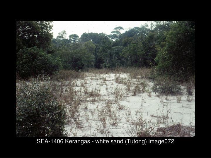 SEA-1406 Kerangas - white sand (Tutong) image072