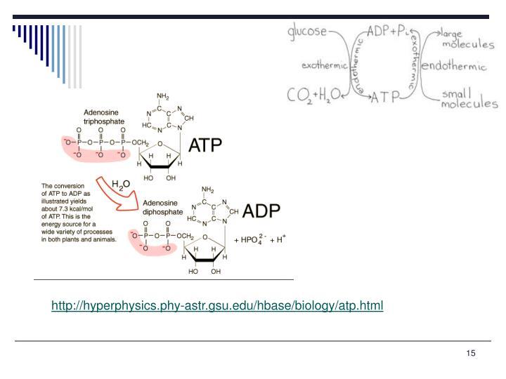 http://hyperphysics.phy-astr.gsu.edu/hbase/biology/atp.html