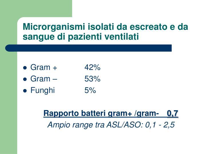 Microrganismi isolati da escreato e da sangue di pazienti ventilati