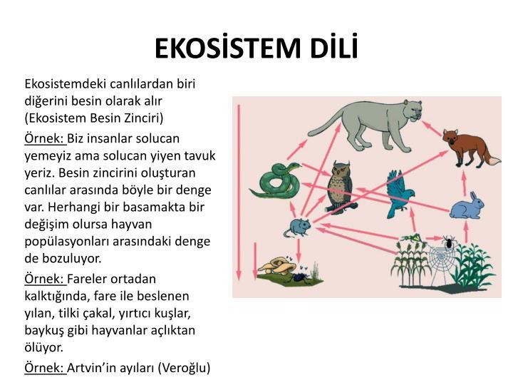 EKOSİSTEM DİLİ