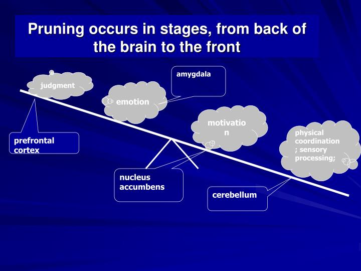 Pruning occurs in stages, from back of the brain to the front