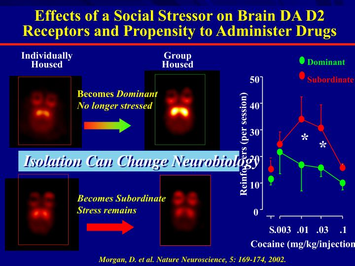 Effects of a Social Stressor on Brain DA D2 Receptors and Propensity to Administer Drugs