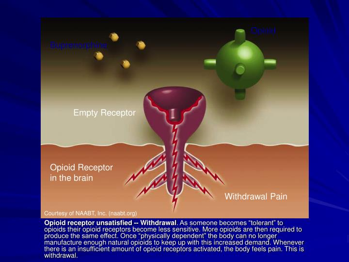 Opioid receptor unsatisfied -- Withdrawal