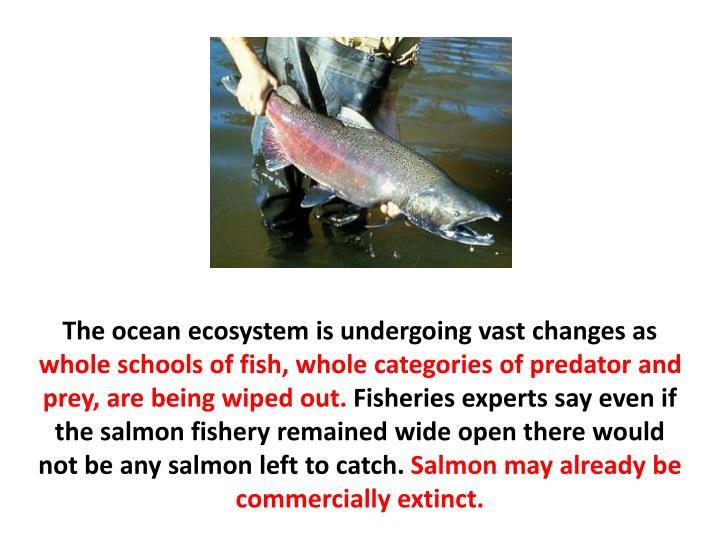 The ocean ecosystem is undergoing vast changes as