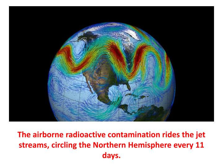 The airborne radioactive contamination rides the jet streams, circling the Northern Hemisphere every 11 days.
