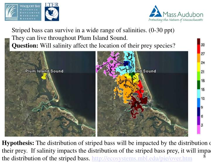 Striped bass can survive in a wide range of salinities. (0-30 ppt)   They can live throughout Plum Island Sound.