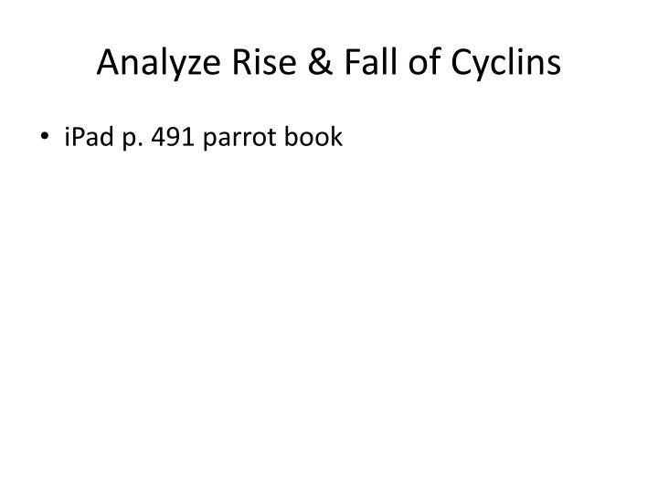Analyze Rise & Fall of Cyclins