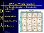 dna at work practice