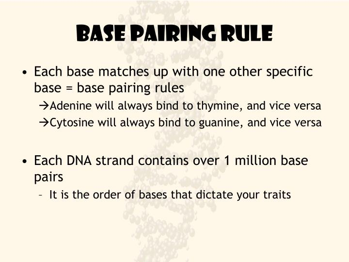 Base pairing rule