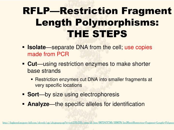 RFLP—Restriction Fragment Length Polymorphisms: