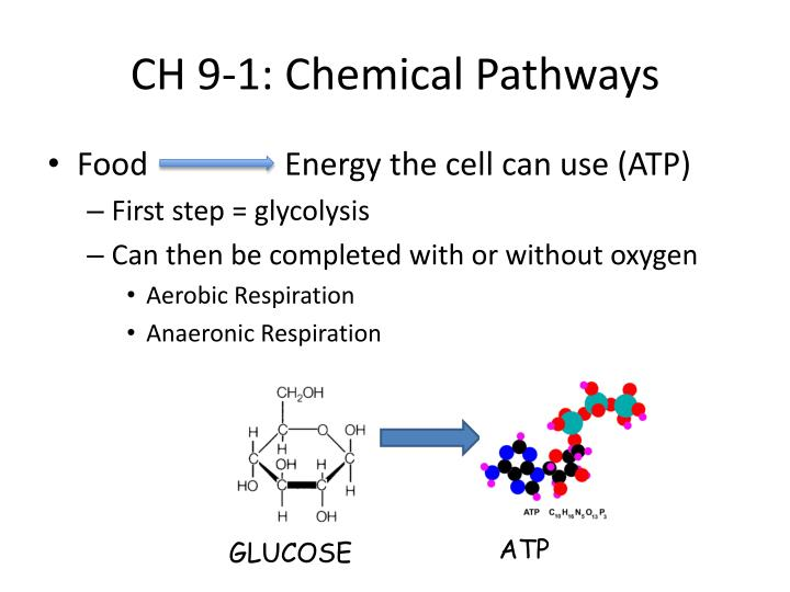 CH 9-1: Chemical Pathways