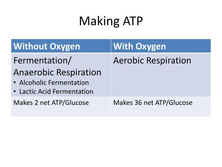 Making ATP