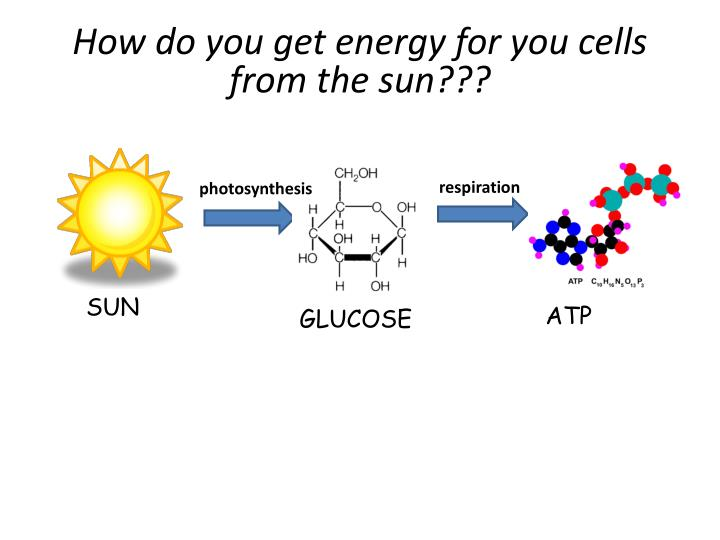 How do you get energy for you cells from the sun???