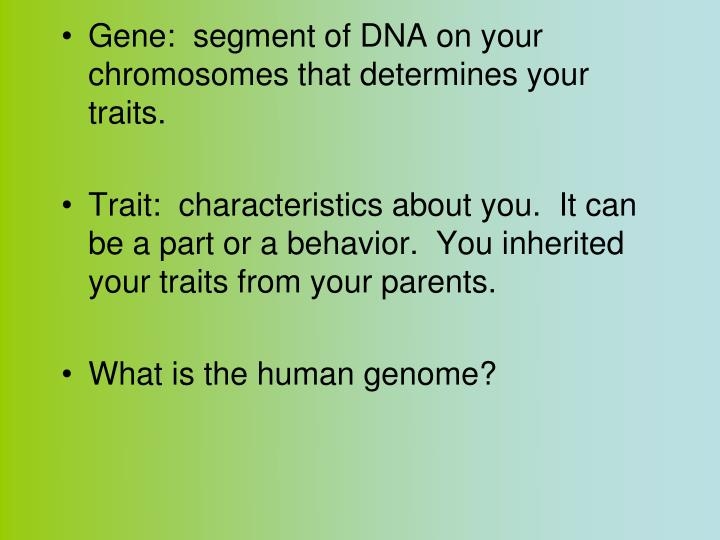 Gene:  segment of DNA on your chromosomes that determines your traits.
