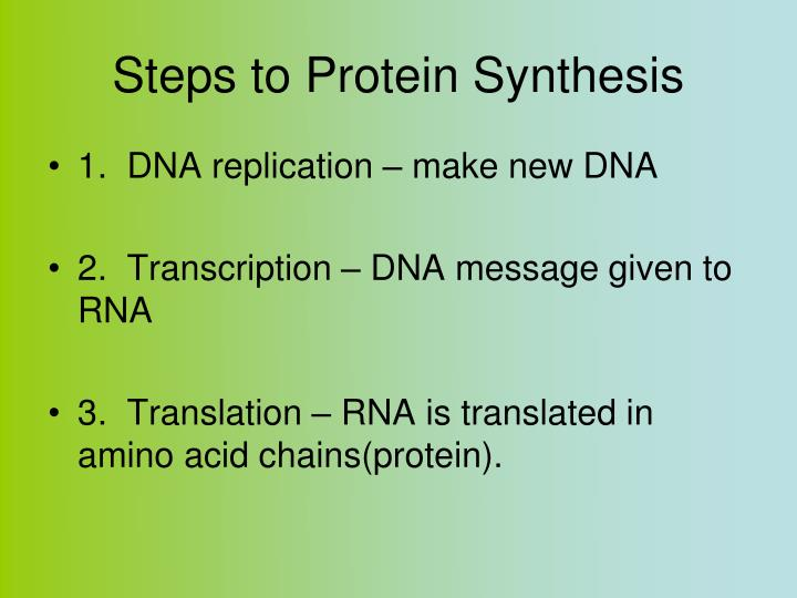 Steps to Protein Synthesis